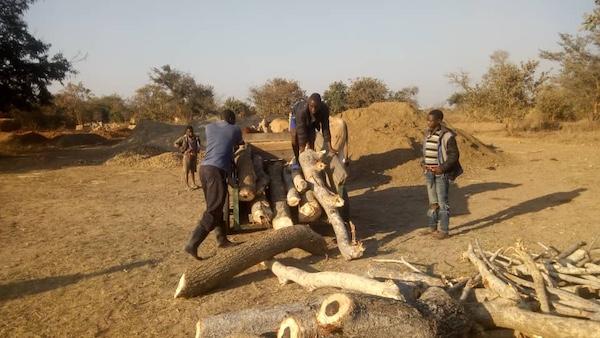Malimba Zambia gathering wood